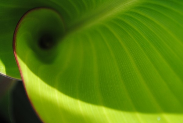 green-leaf-png